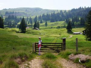 Przez pastwiska