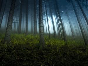 W lesie.