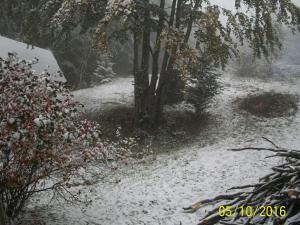 zaczyna padać śnieg