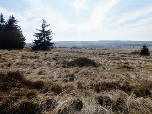 Krajobraz Hautes Fagnes
