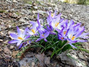 Wiosna w pełni!