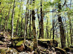 Dolina Ordesy - lasy bukowe