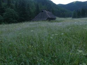 Dolina Jaworzynka o poranku