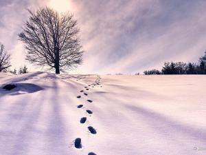 Wycieczka na Wysoką w Pieninach była ciekawa z kilku powodów. Południowe stoki były kompletnie pozbawione śniegu, ale te północne obfitowały jeszcze w biały puch.