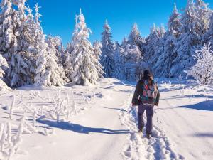 W krainie śniegu