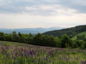 Scena 4: Góry Bystrzyckie (czerwiec)