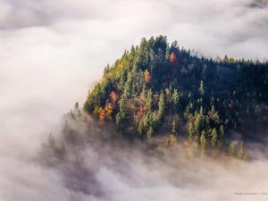 Pieniński mgły