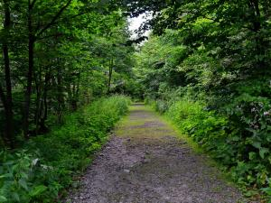 Szlak z Przełęczy Bukowskiej
