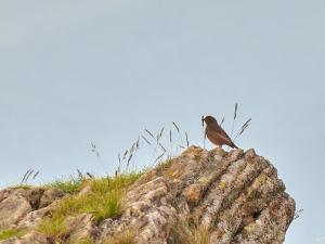 Ciszę w Bieszczadach przerywał nam tylko śpiew ptaków