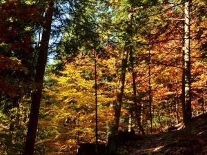 Pieniński las