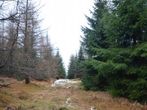 grudniowy las