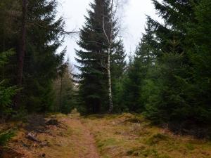 ścieżka w górach