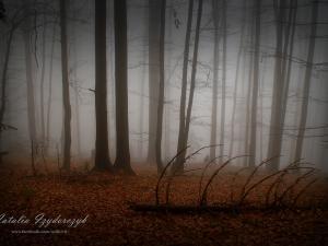 Las wokół schroniska na Luboniu Wielkim we mgle