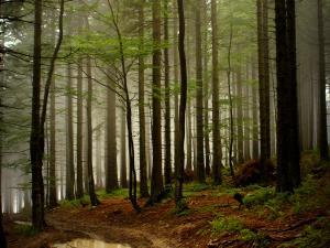 Beskid Żywiecki - podeszczowy szlak