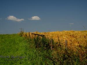 Trzy piękne kolory lata w Gorcach