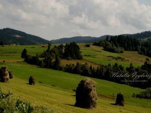Lato w Gorcach