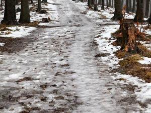 Szlak na Przykrą w Beskidzie Śląskim