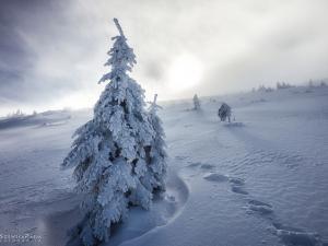 Śnieg dookoła