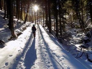 Tatrzański las