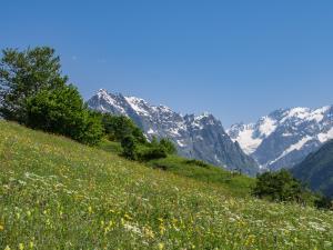 """""""alpejska"""" łąka"""