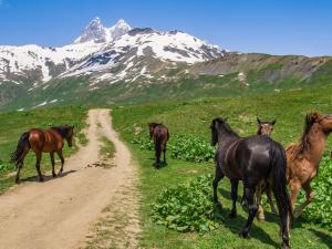 łatwiej spotkać pół-dzikie konie niż człowieka
