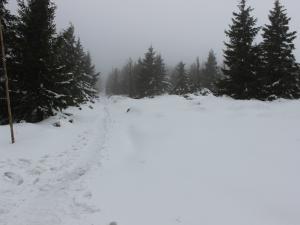 Droga z Przełęczy Sowiej do Schroniska Jelenka