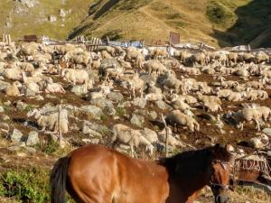 W drodze na szczyt spotkałyśmy 3 osoby i sporo zwierząt.