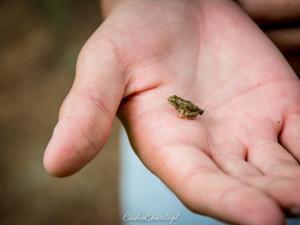 Przyjaciółka żabka