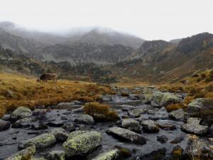 Rzeka Siscaro spowita mgłą