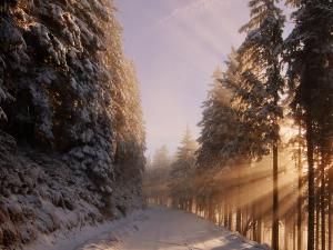 Las na zboczach Śnieżnika