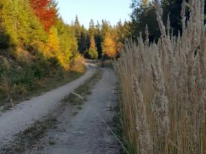 Piękna droga powrotna łącząca szlak Polski ze Słowackim, niestety...