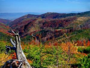 Jesień w Beskidzie Śląskim