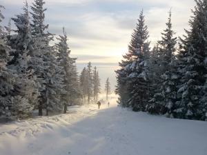 Zielony szlak w kierunku Malinowskiej Skały
