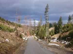 Niebieski szlak na Krawców Wierch - okolice Złatnej