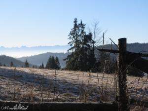 Bezśnieżna zima na Starych Wierchach, styczeń 2016