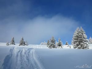 Zima na Rycerzowej, luty 2016
