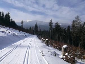 Trasy biegowe w rejonie Kamienicy mają świetne osie widokowe