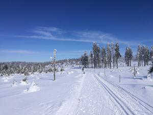 Szlak graniczny w okolicy szczytu Brusek