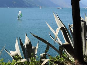 Kaktusy przy ścieżce rowerowej z Torbole do Riva del Garda.