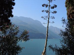 Ciekawa roślinność nad Lago di Garda.