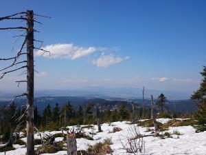 Szczyt Turbacza, widok na Babią Górę