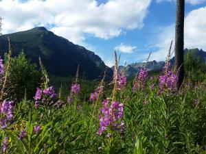 Tatrzańska flora