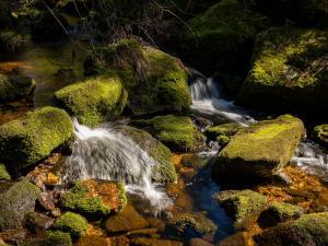 Kozi Potok w Górach Izerskich