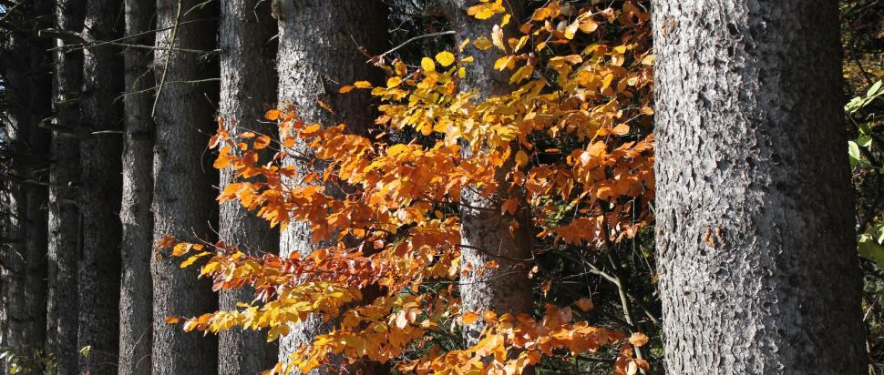 Drzewa nad Polanicą
