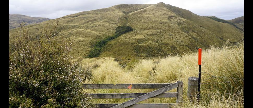 Silver Peaks poprzecinane są gdzieniegdzie starymi ogrodzeniami owczych pastwisk.