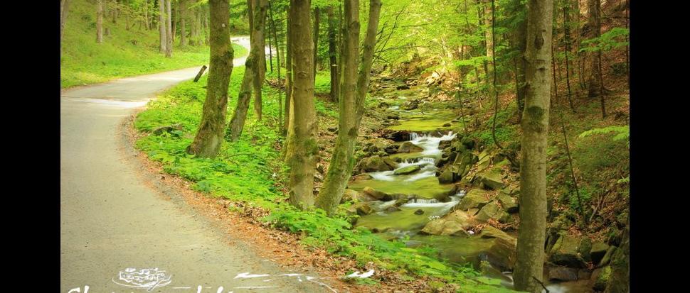 Droga wzdłuż Wielkiej Roztoki - Rytro