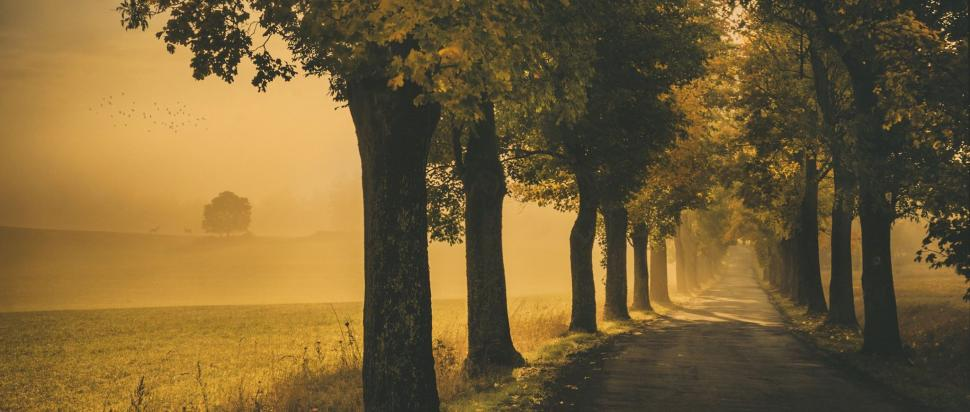Jesienny poranek na drodze z Łężyc do Złotna
