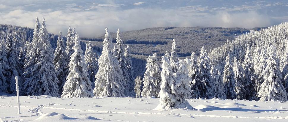 Szlak zielony ze Schroniska na Śnieżniku na Przełęcz Puchacza