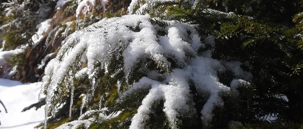 Śnieg już topnieje ale nie odpuszcza